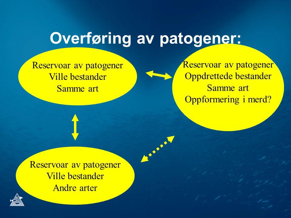 Overføring av patogener: