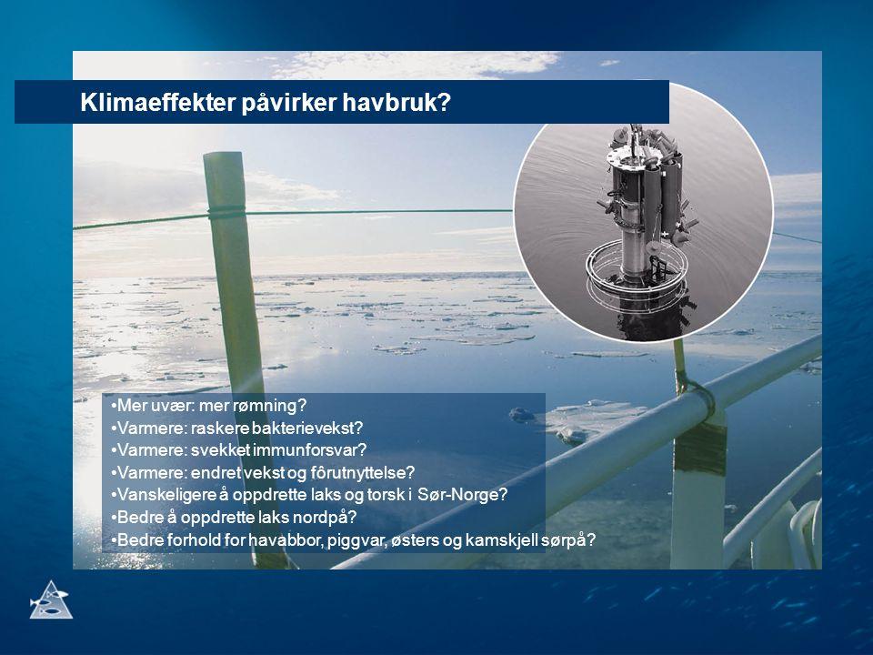 Klimaeffekter påvirker havbruk