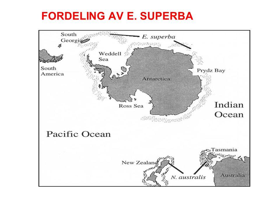 FORDELING AV E. SUPERBA