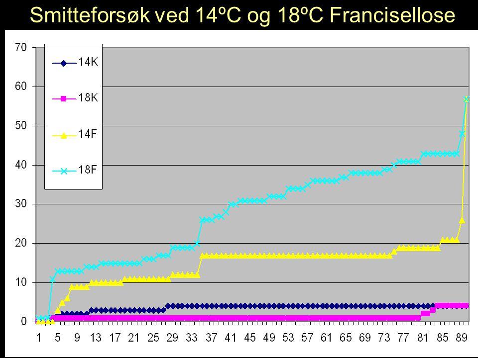 Smitteforsøk ved 14ºC og 18ºC Francisellose