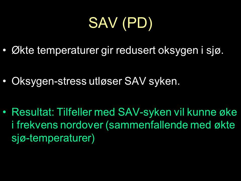 SAV (PD) Økte temperaturer gir redusert oksygen i sjø.