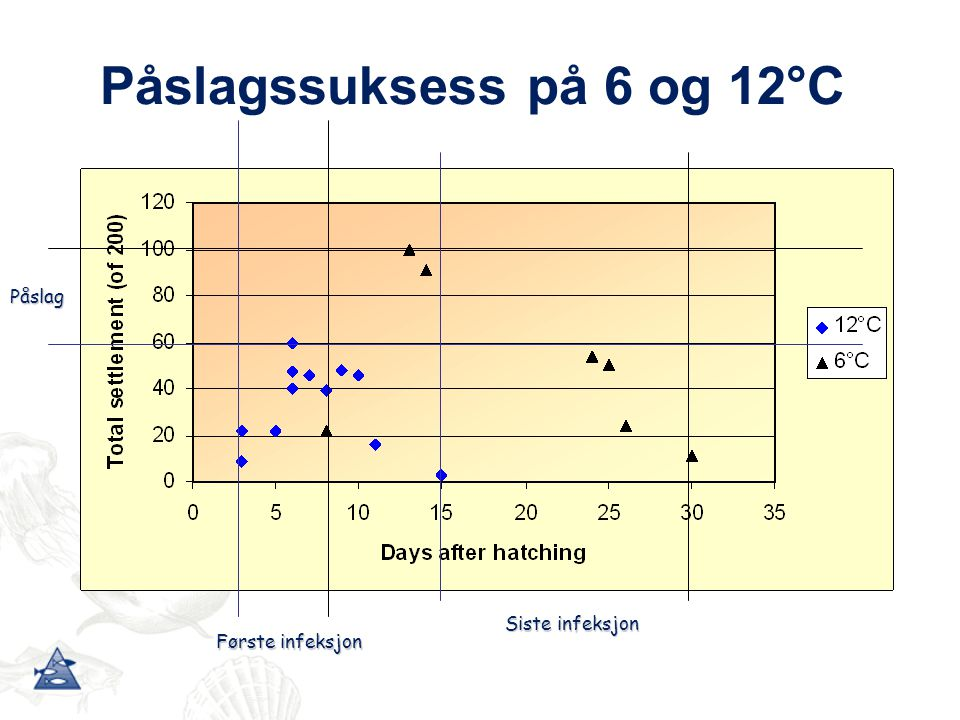 Påslagssuksess på 6 og 12°C