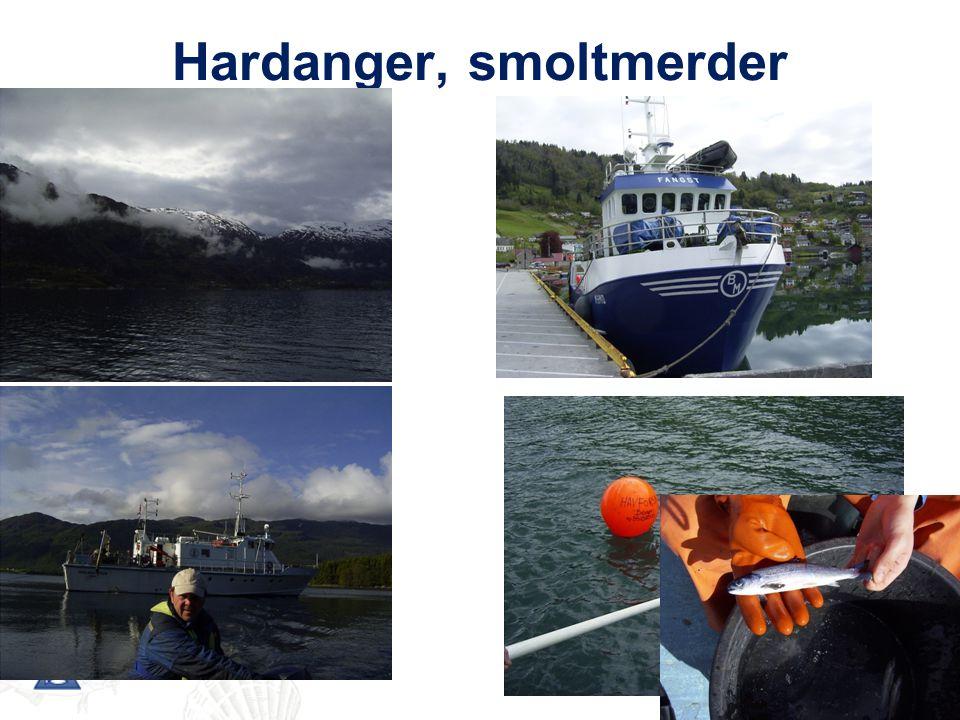 Hardanger, smoltmerder