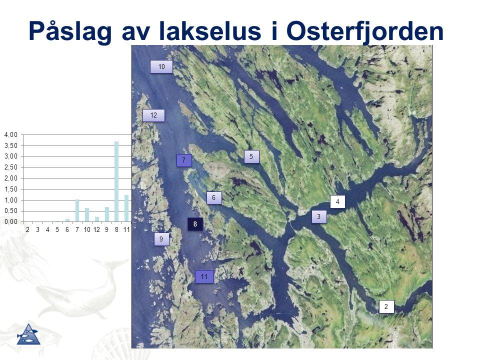 Påslag av lakselus i Osterfjorden