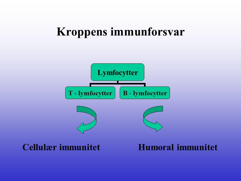 Kroppens immunforsvar