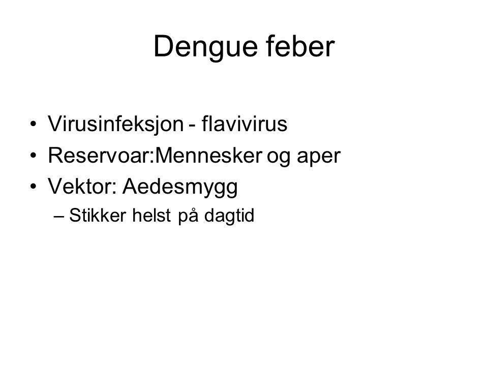 Dengue feber Virusinfeksjon - flavivirus Reservoar:Mennesker og aper