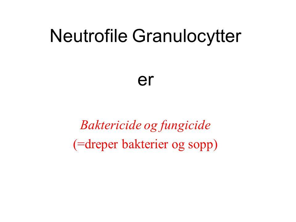 Neutrofile Granulocytter er