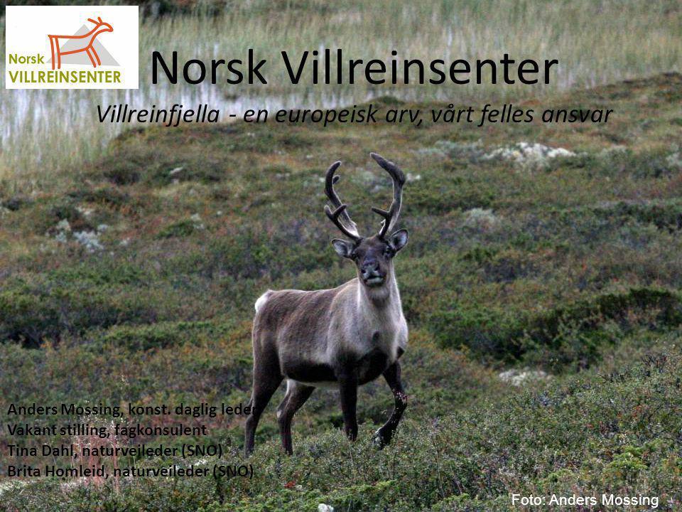 Norsk Villreinsenter Villreinfjella - en europeisk arv, vårt felles ansvar