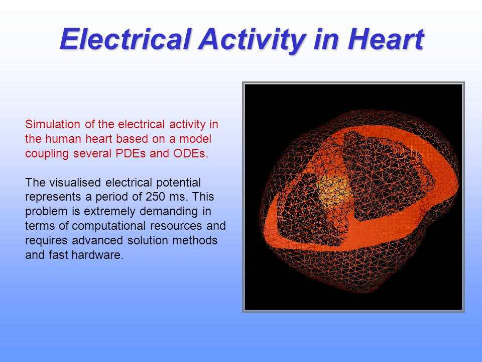 Electrical Activity in Heart