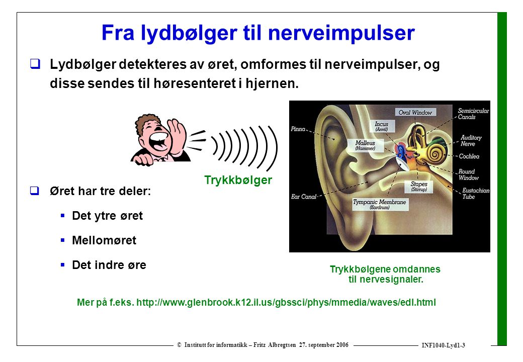 Fra lydbølger til nerveimpulser