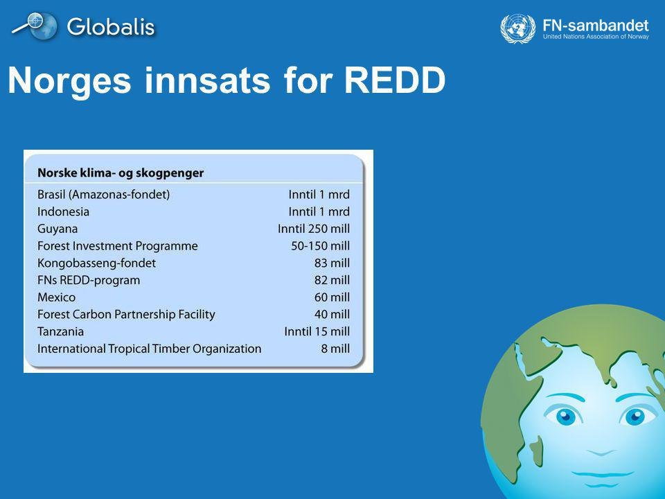 Norges innsats for REDD