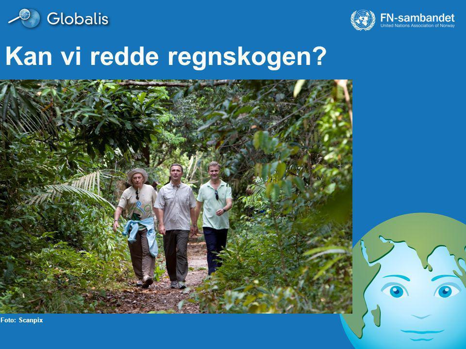 Kan vi redde regnskogen