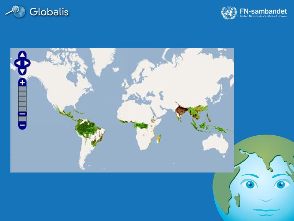 Les mer på www.globalis.no/regnskog under Trenger vi regnskogen