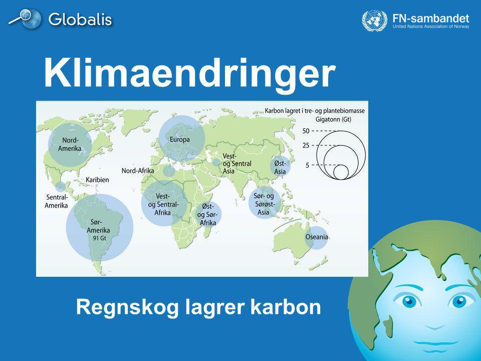 Regnskog lagrer karbon