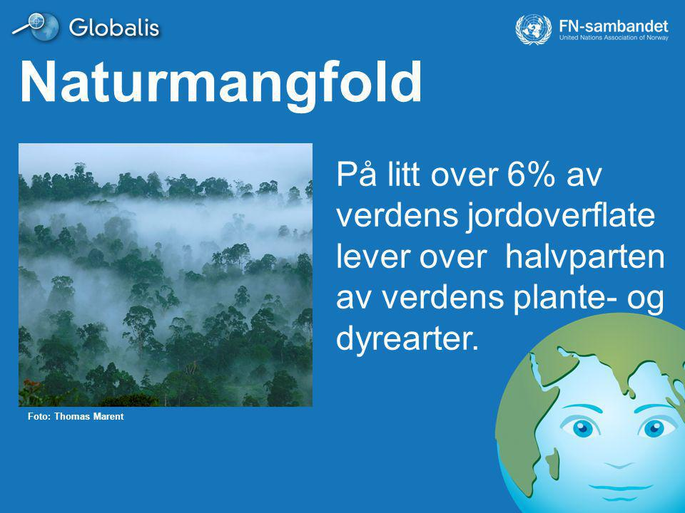 Naturmangfold På litt over 6% av verdens jordoverflate lever over halvparten av verdens plante- og dyrearter.