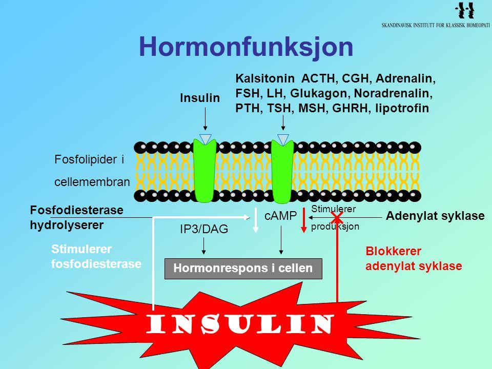 Hormonrespons i cellen