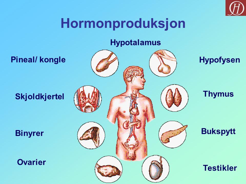 Hormonproduksjon Hypotalamus Pineal/ kongle Hypofysen Thymus