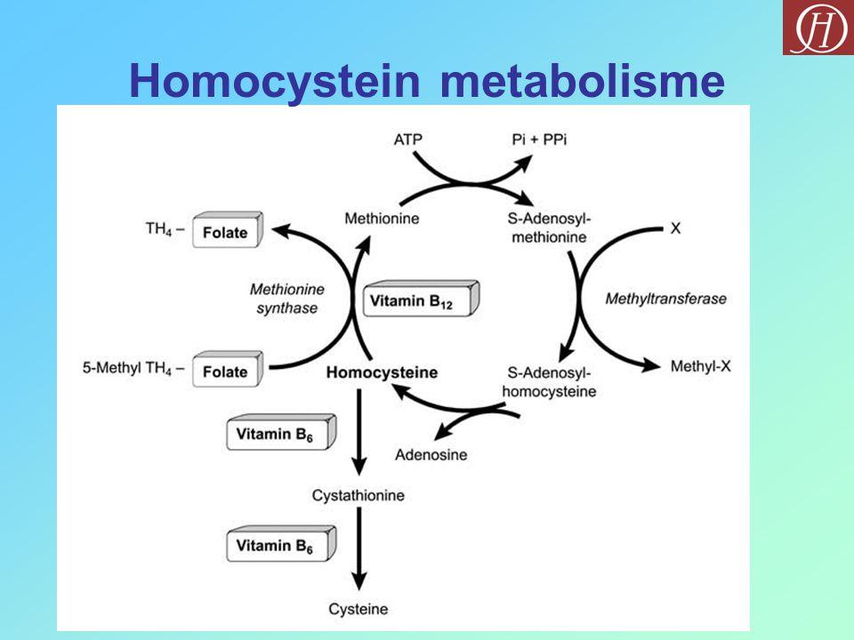 Homocystein metabolisme
