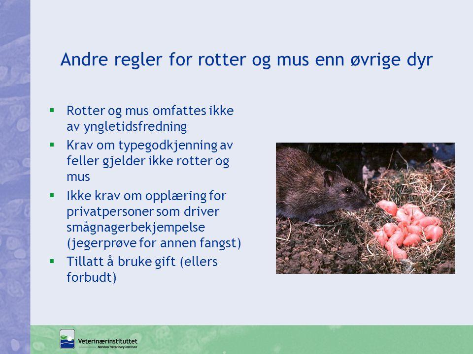 Andre regler for rotter og mus enn øvrige dyr