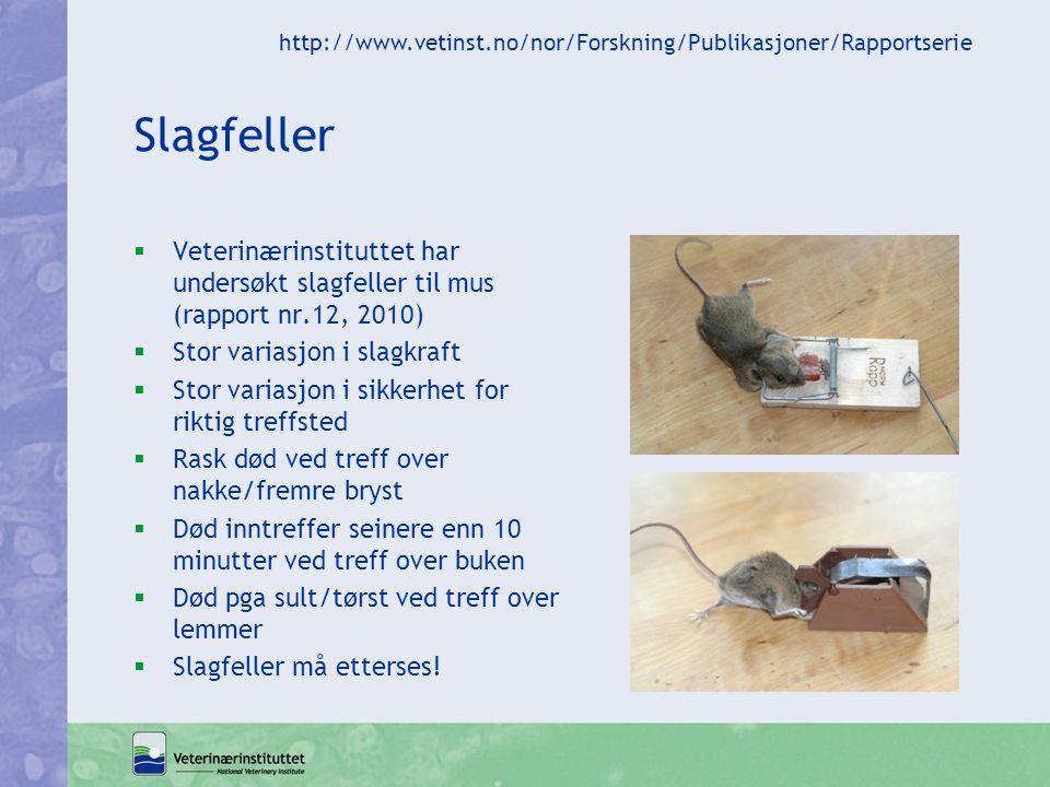 http://www.vetinst.no/nor/Forskning/Publikasjoner/Rapportserie Slagfeller.
