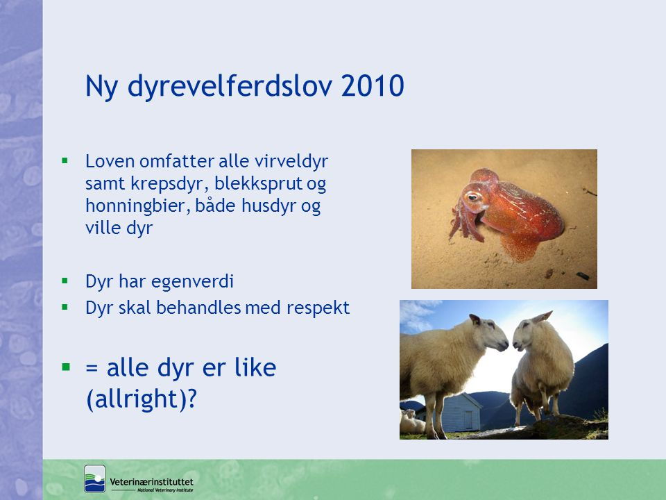 Ny dyrevelferdslov 2010 = alle dyr er like (allright)