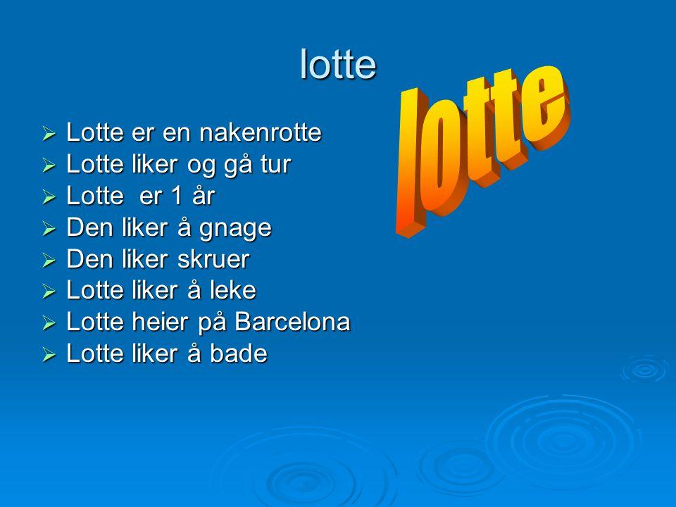 lotte lotte Lotte er en nakenrotte Lotte liker og gå tur Lotte er 1 år