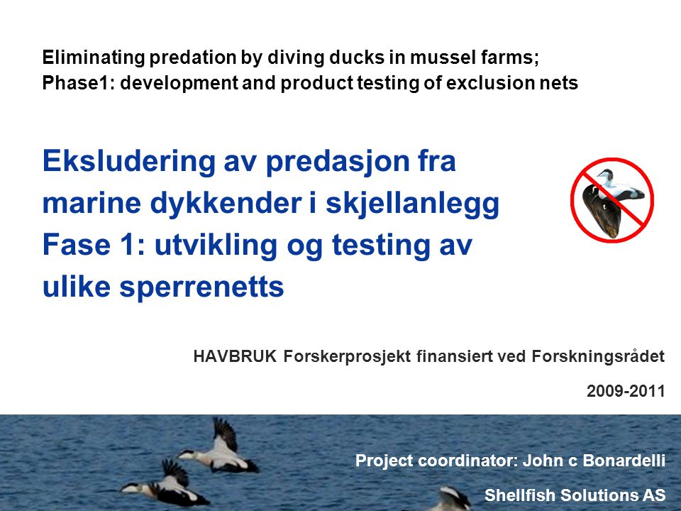 Eliminating duck predation in mussel farms - NRC proposal 2009-10