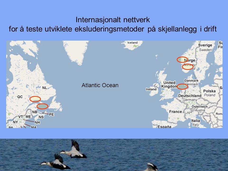 Internasjonalt nettverk