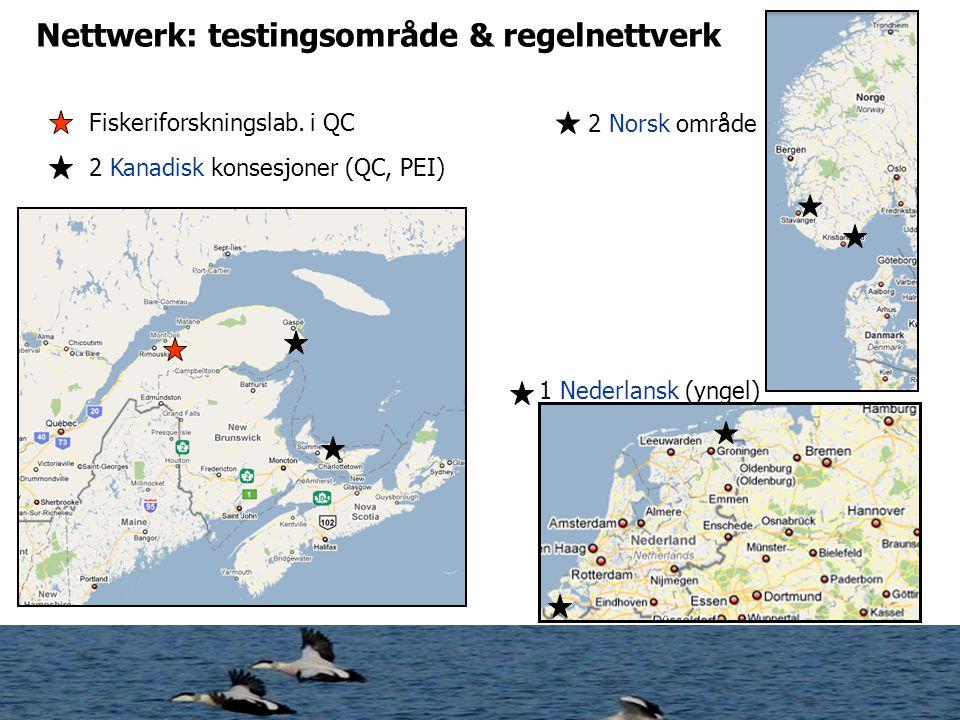 Nettwerk: testingsområde & regelnettverk