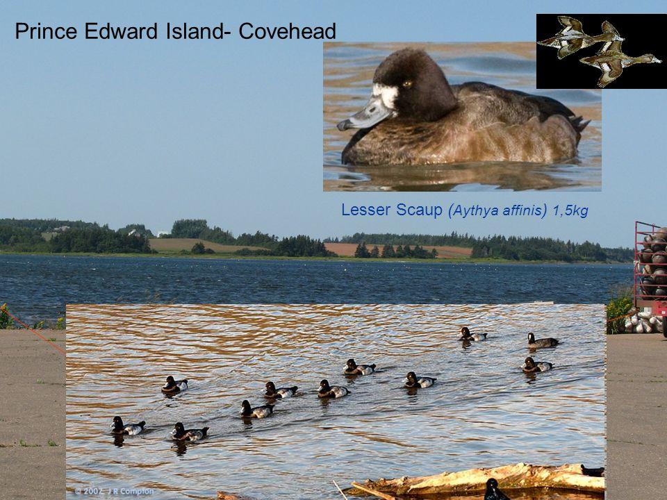 Prince Edward Island- Covehead