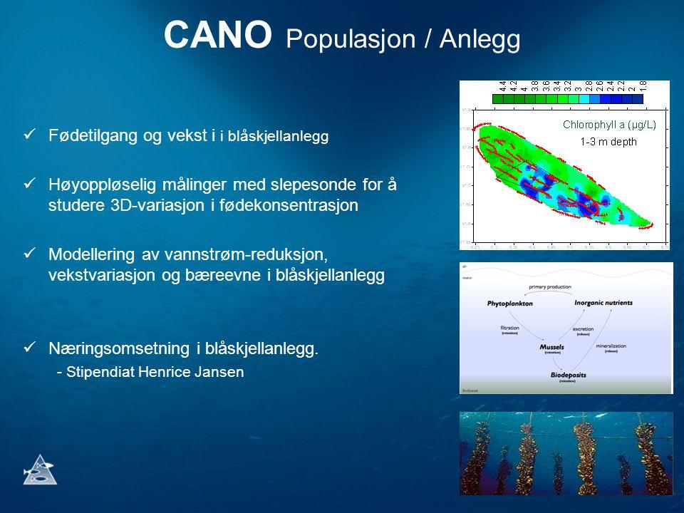 CANO Populasjon / Anlegg