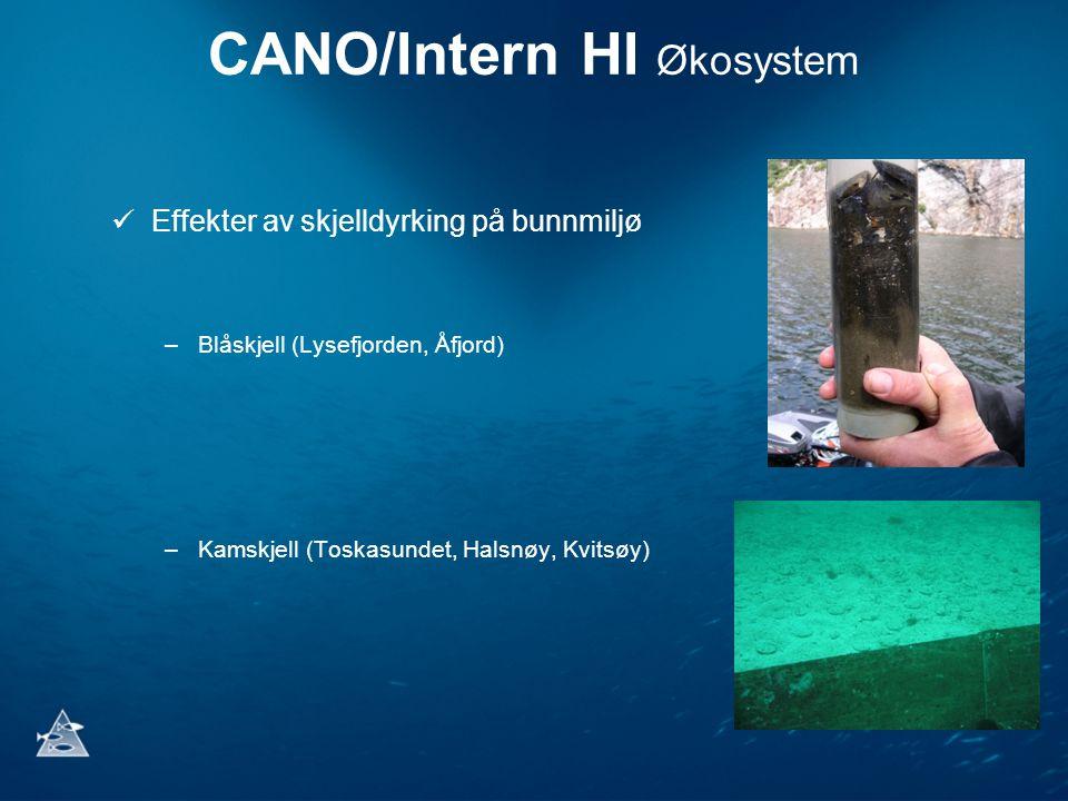 CANO/Intern HI Økosystem