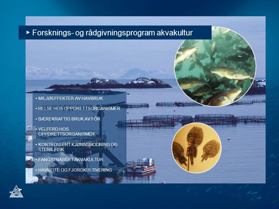 ▶ Forsknings- og rådgivningsprogram akvakultur