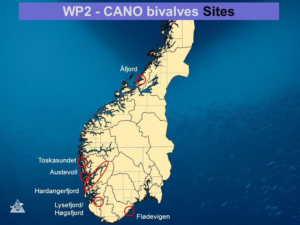 WP2 - CANO bivalves Sites