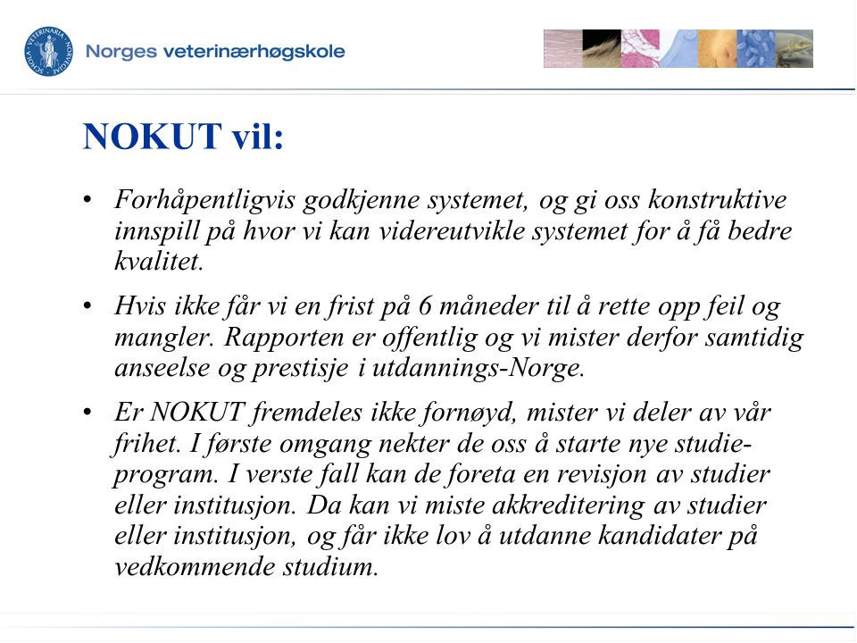 NOKUT vil: Forhåpentligvis godkjenne systemet, og gi oss konstruktive innspill på hvor vi kan videreutvikle systemet for å få bedre kvalitet.
