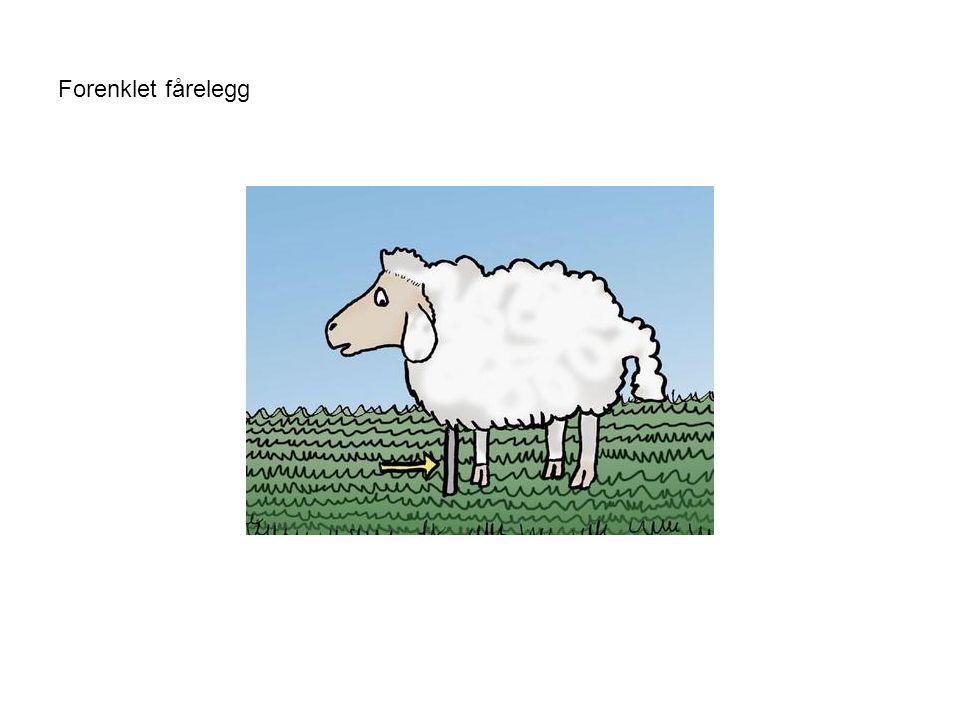 Forenklet fårelegg