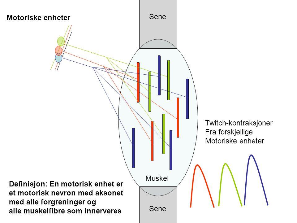 Motoriske enheter Sene. Twitch-kontraksjoner. Fra forskjellige. Motoriske enheter. Muskel. Definisjon: En motorisk enhet er.