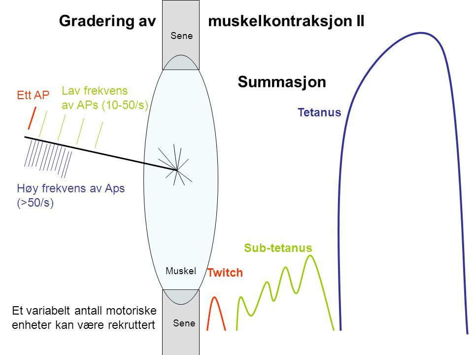 Gradering av muskelkontraksjon II
