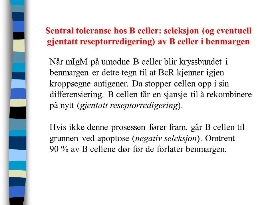 Sentral toleranse hos B celler: seleksjon (og eventuell gjentatt reseptorredigering) av B celler i benmargen