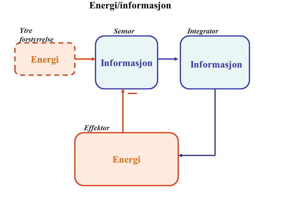 Informasjon Energi Energi
