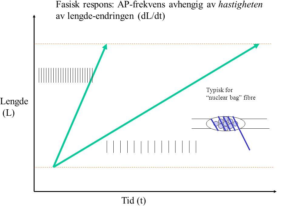 Fasisk respons: AP-frekvens avhengig av hastigheten