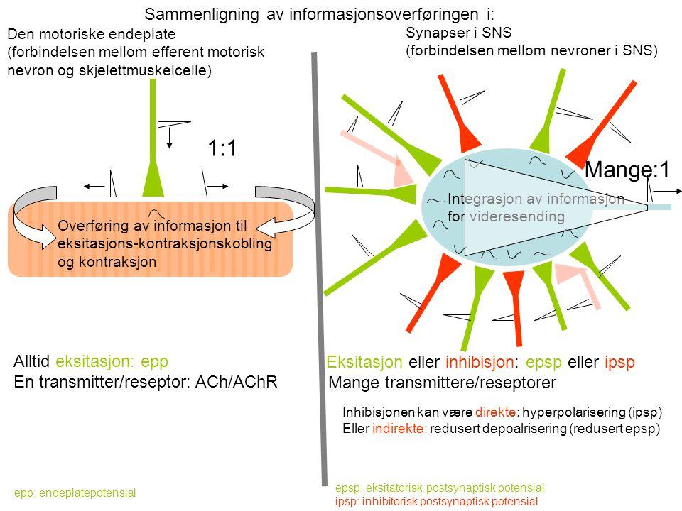 1:1 Mange:1 Sammenligning av informasjonsoverføringen i: