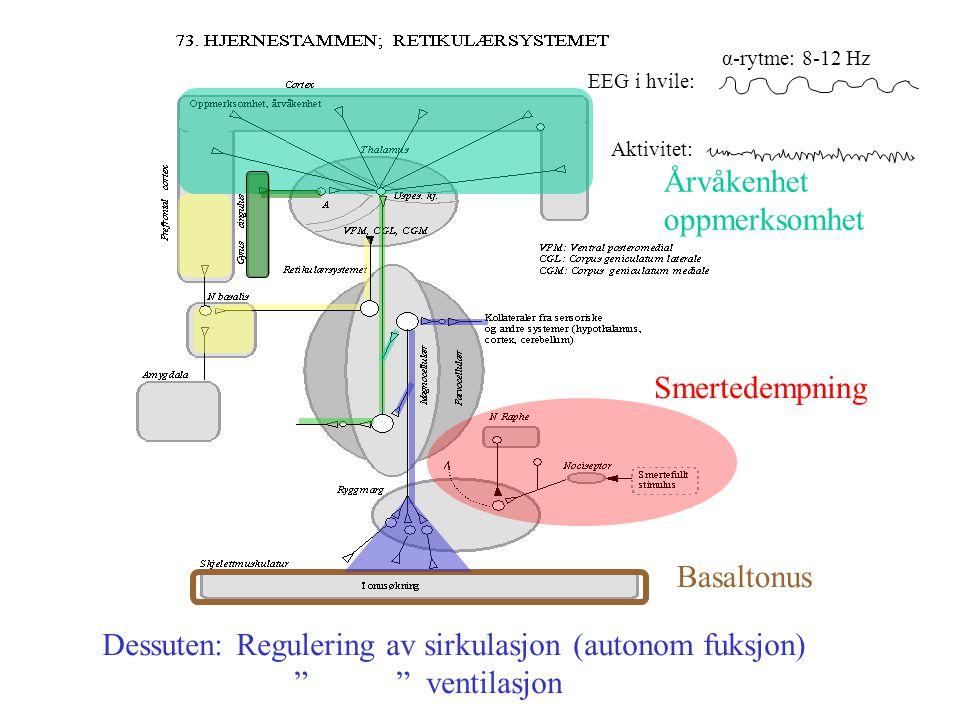 Dessuten: Regulering av sirkulasjon (autonom fuksjon) ventilasjon