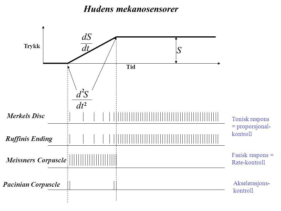 Hudens mekanosensorer