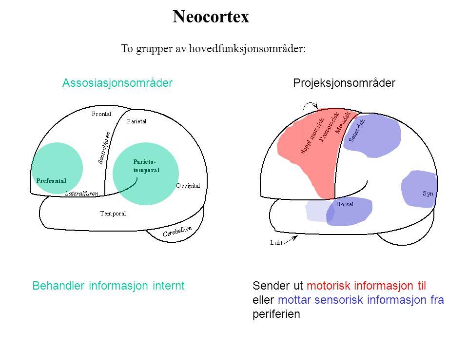 Neocortex To grupper av hovedfunksjonsområder: Assosiasjonsområder
