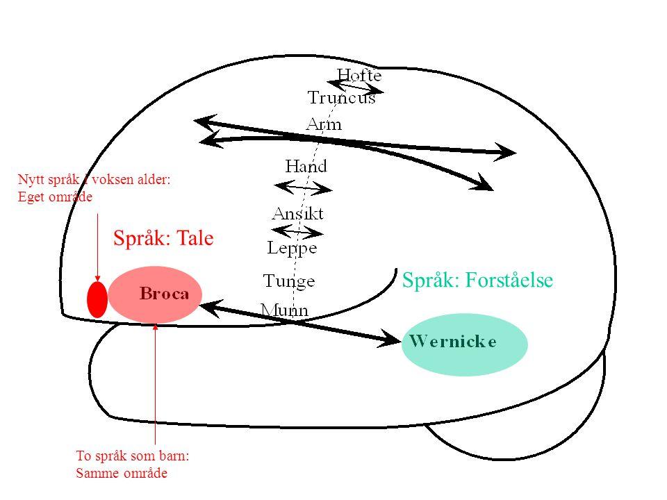 Språk: Tale Språk: Forståelse Nytt språk i voksen alder: Eget område