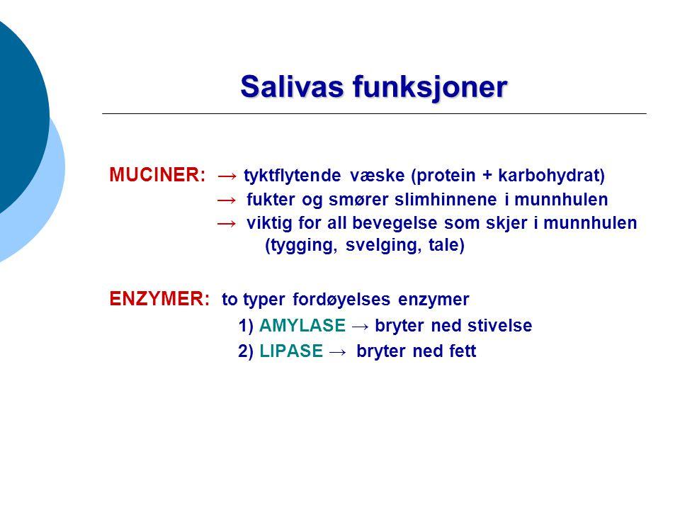 Salivas funksjoner