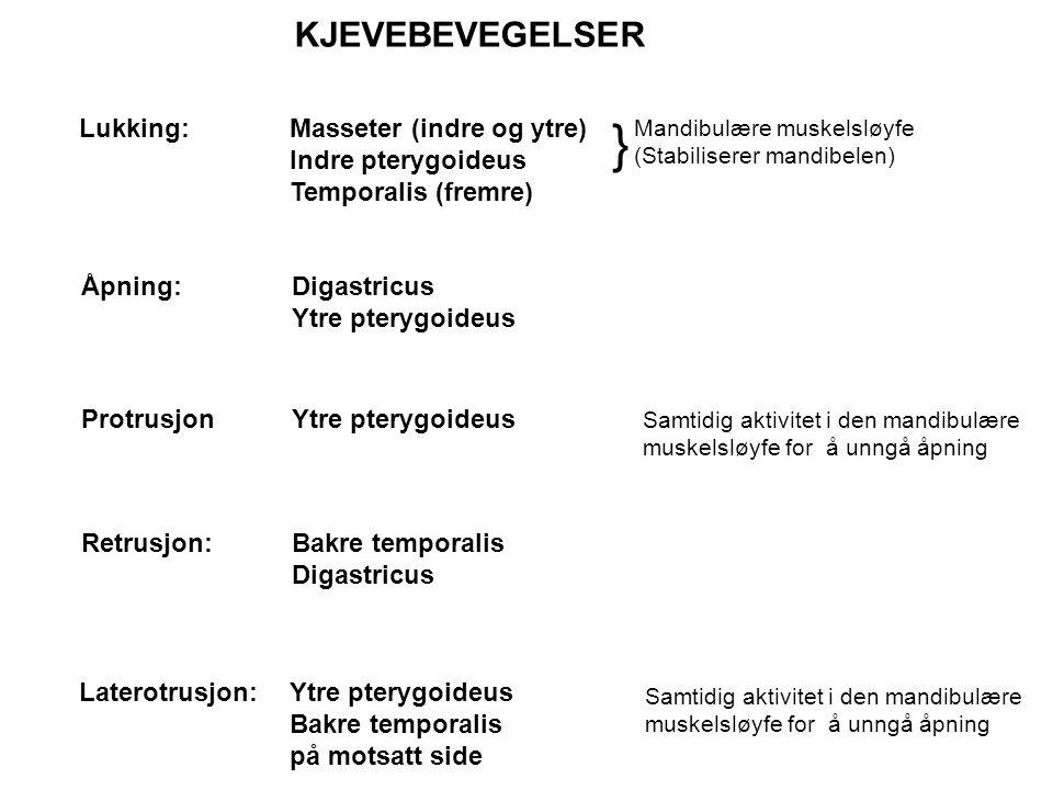} KJEVEBEVEGELSER Lukking: Masseter (indre og ytre) Indre pterygoideus