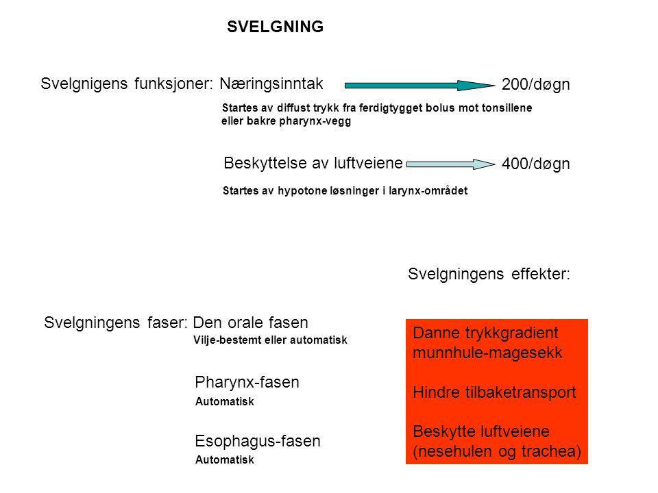 Svelgnigens funksjoner: Næringsinntak