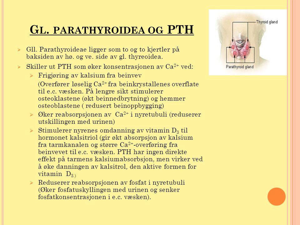 Gl. parathyroidea og PTH